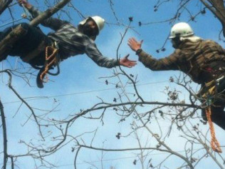Working in Tree Safely